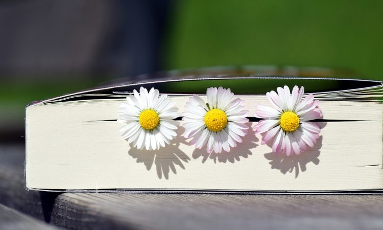 daisies in a book